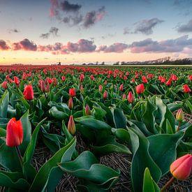 Red carpet sunset van Max ter Burg Fotografie
