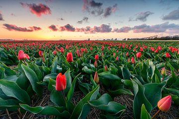 Red carpet sunset
