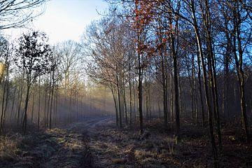 Bos in zonnestralen von Maarten Honinx