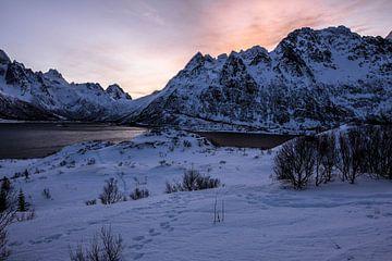Sonnenaufgang auf den Lofoten von Julia Schellig