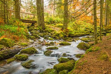 Autumn forest van Elles Rijsdijk