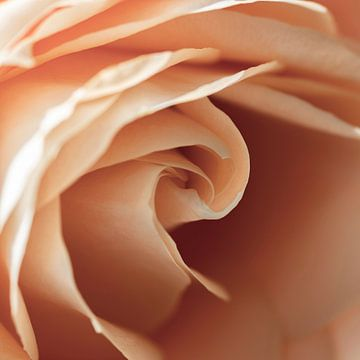 Quadratisches Bild des Herzens einer Rose von Shotsby_MT