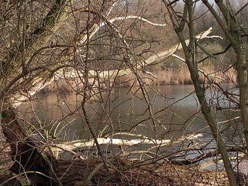 Herfstachtige kijk door de bomen naar het water von Ingrid Van Maurik