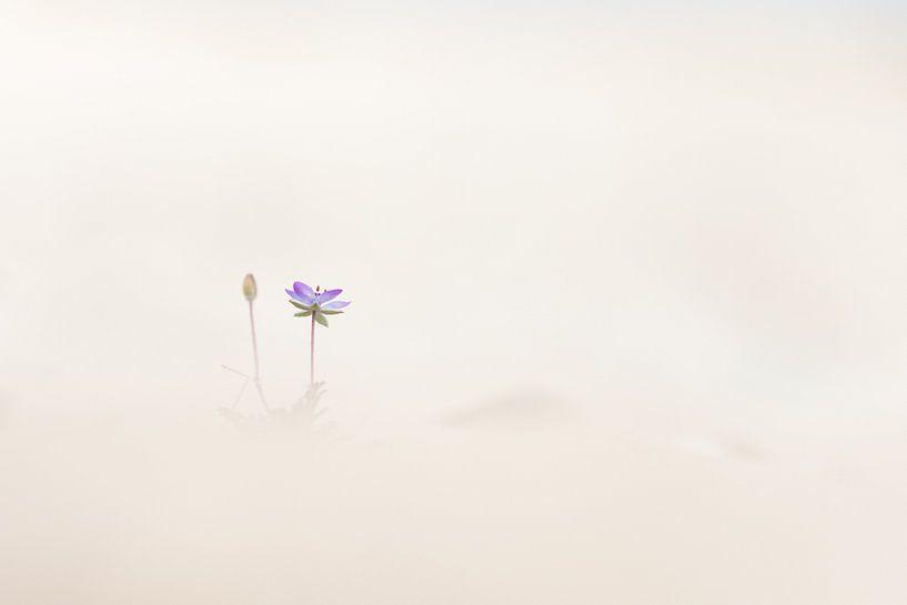 Reigersbek eenzaam in het zand van Frans Batenburg