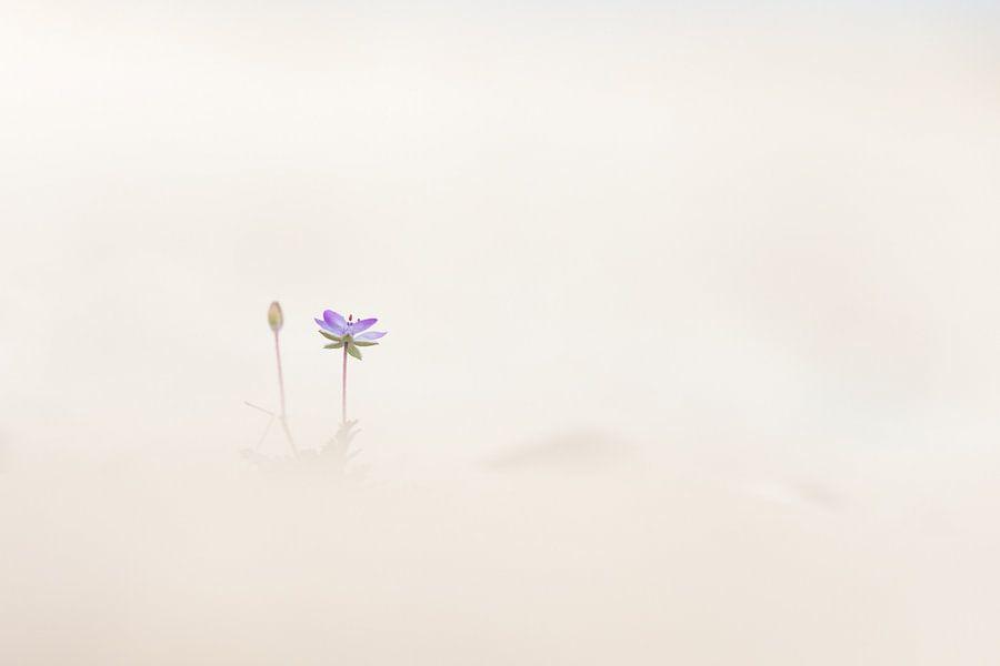 Reigersbek eenzaam in het zand