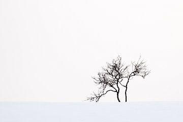 Boom in sneeuwlandschap van Antwan Janssen