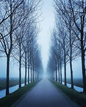 Bomen Symmetrie sur Niels Krommenhoek