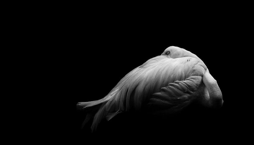 Schönheit in der Dunkelheit, Andi Halil von 1x