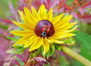 Gele bloem met lieveheersbeestje