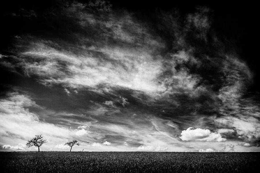 Just two trees van Lex Schulte