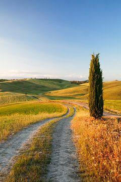 Toscaans landschap met cipressen, Toscane, Italië van Markus Lange