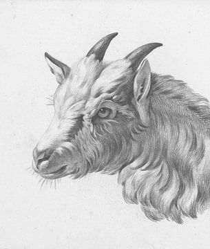 Kopf einer Ziege, nach links von Jean Bernard, 1775 - 1833