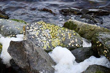 Keien aan de oever van het Veerse meer van bart hartman