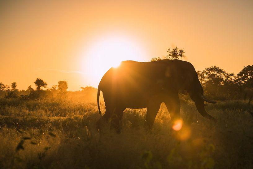 Perfect einde van de dag - gouden olifanten silhouet van Sharing Wildlife