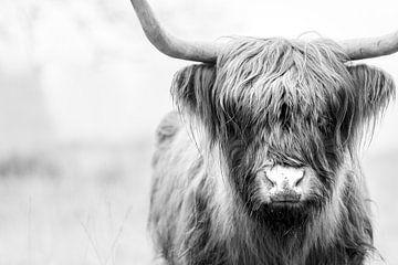 Schottischer Highlander von GoWildGoNaturepictures