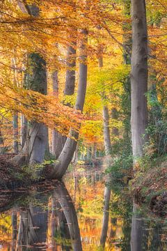 Herfst reflecties Staverdense beek van Dennis Mulder