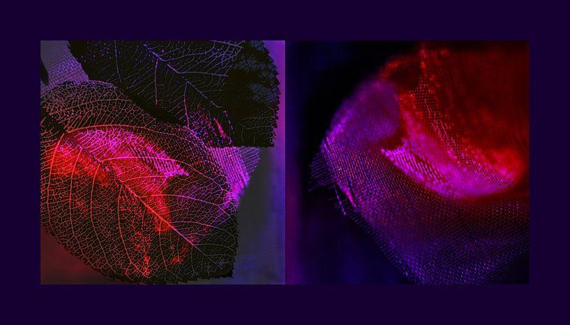 symphonie in paars en roze van Hanneke Luit