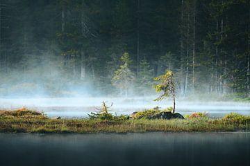 Schwimmende Insel im Nebel von Max Schiefele