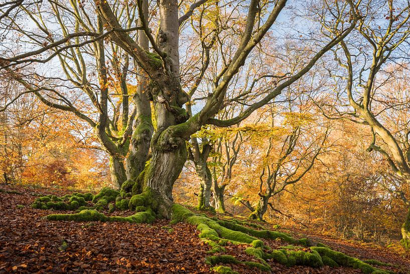 Herbst im Märchenwald von Jürgen Schmittdiel Photography