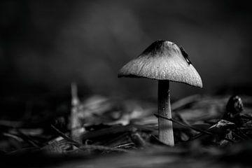 Fungus von ZEVNOV .