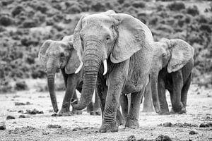 Olifanten en route van