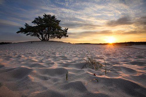 Boom en zandduinen II van Mark Leeman