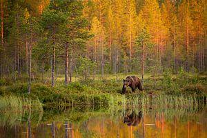 Bruine beer langs het water, met reflectie en herfstkleuren van
