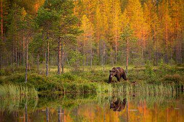 Bruine beer langs het water, met reflectie en herfstkleuren van Caroline van der Vecht