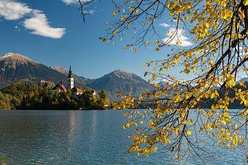 Marienkirche im Herbst von Denis Feiner