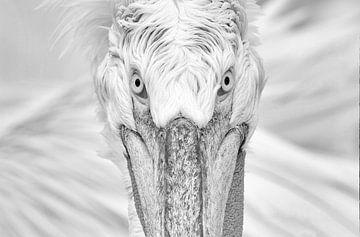 Kroeskop Pelikaan Portret (Monochroom) van Harry Eggens