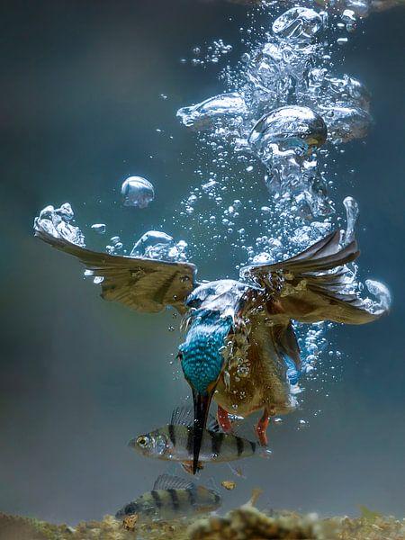 Duikende ijsvogel (onder water) van Jaap La Brijn