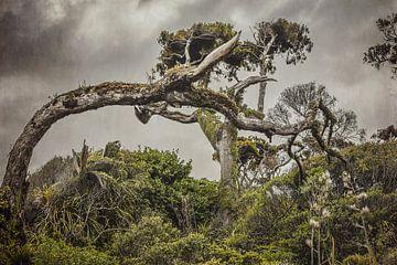 Dramatische boom van Marina de Wit