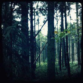 Het Bos van Kuba Bartyński