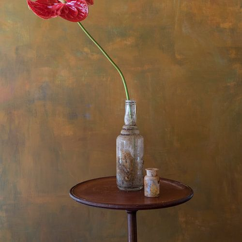 Anthurium van Marion Kraus