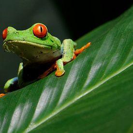 Costa Rica van René Schotanus