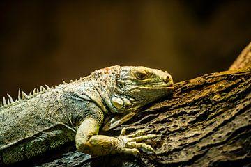 Reptiel von Photography by Karim