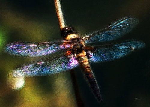Anisoptera - Libelle von