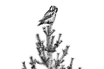 Sperlingskauz auf der Suche von Sam Mannaerts Natuurfotografie
