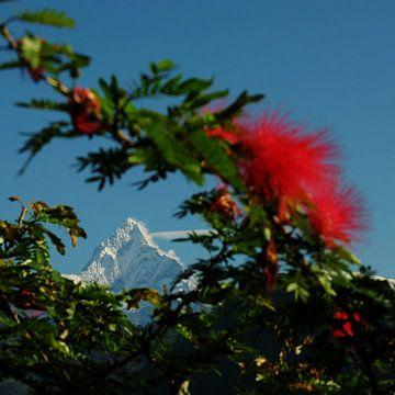 The Thorny Peak van Stino Photo