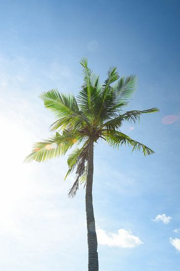 Palmboom van Kimberley Jekel