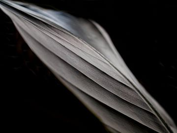 Strelitzia Blätter - dunkel von Renate Mager