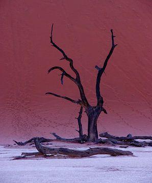 Dode boom in Dead Vlei van Christel Nouwens- Lambers