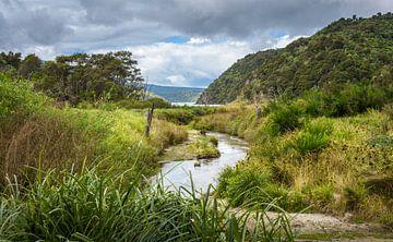 Beekje stroomt door de vulkanische vallei, Nieuw Zeeland van Rietje Bulthuis