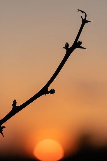 silhout van een eenzame tak tijdens zonsondergang