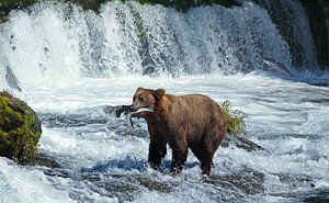 Beren, Bears, Brooks Falls
