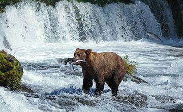 Beren, Bears, Brooks Falls van Yvonne Balvers