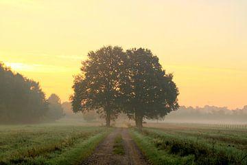 Two oaks van Marcel van Rijn