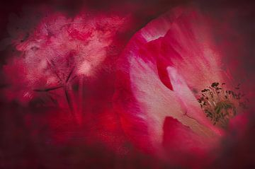 Mohnblumen Grunge von Annette Hanl