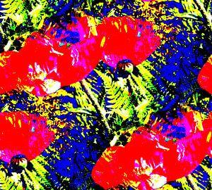 Mohnblumen von
