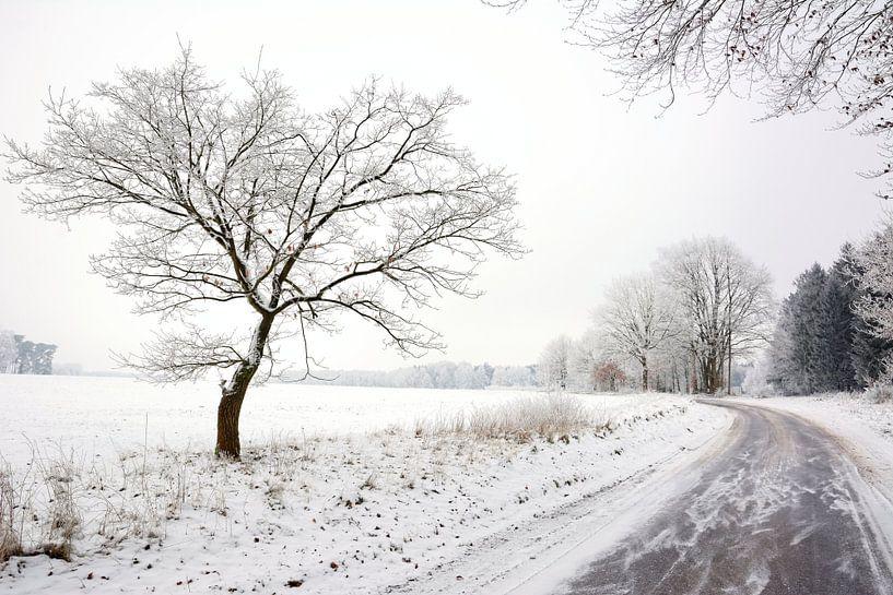 Frozen van Gisela Scheffbuch